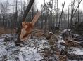 AKTUALIZOVÁNO! Kalamita v lesích si vyžádá zákaz vstupu