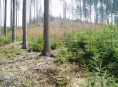 V lesích přibývá listnáčů, snáší lépe sucho