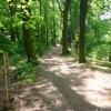 Historická alej u rybníka Kolečko v Tovačově   zdroj foto: Lesy ČR