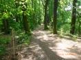 Historická alej u rybníka Kolečko v Tovačově byla obnovena