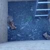 záchrana lišek                                zdroj foto: HZS Olk