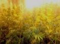 """Kriminalisté z kraje zasadili další """"ránu"""" výrobcům a distributorům drog"""