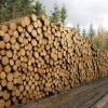 ilustrační snímek                            zdroj foto: Lesy ČR
