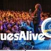 Festival Blues Alive získal nejprestižnější světové žánrové ocenění!     zdroj foto: BA
