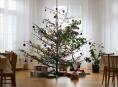 Vánoční borovice a smrky dostanou zdarma dětská sociální a zdravotnická zařízení