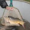 V Nemocnici Šumperk se opět rozdávaly ryby na štědrovečerní tabuli   foto: šumpersko.net - S- Adoltová