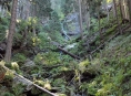 Lesníci z Arcibiskupských lesů a statků Olomouc sčítají škody po nedělní vichřici na Jesenicku