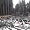 ilustrační snímek                     zdroj: Lesy ČR