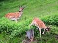 Pozor na lesní zvěř na Šumpersku!