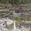 """""""Vracíme vodu lesu"""" projekt za více než miliardu"""