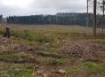 Chcete být u založení nového lesa?