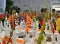V Rapotíně připravují 57. ročník Výstavy mečíků