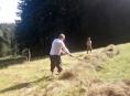 Lesy ČR organizují sečení chráněných luk na Jesenicku