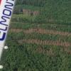 Lesníkům v boji s kůrovcem pomáhají rekognoskační lety     zdroj foto: alsol