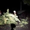 Hasiči v kraji odstraňovali následky nočních bouřek      zdroj foto: HZS OLK