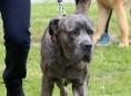 Chovatelé mají povinnost nechat čipovat své psy do konce roku