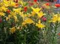 """Další """"kvetoucí záhony"""" vzniknou v Šumperku"""