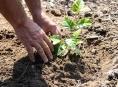 Den za obnovu lesa už tuto sobotu