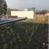 Na mohelnické ZŠ Mlýnská slavnostně otevřeli zelenou střechu  zdroj foto: mum