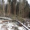 13. února - les na Kleti v podhůří Šumavy, Jihočeský kraj    zdroj foto: LČR