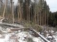 Vichřice Sabine poškodila asi 950 tisíc kubíků dříví