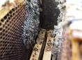 Letošní zima byla pro včelaře krutá