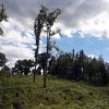 Stromy s příběhem - buky na Frýdlantsku     zdroj foto: LČR