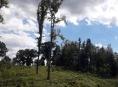 """Stromy s příběhem """"Lesní hrdinové"""""""