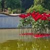 Vyznání růžím 2020                           zdroj foto: FB Flora Olomouc