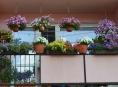Zábřežská radnice ocení rozkvetlá okna, balkony i předzahrádky