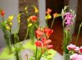 Výstava květin ve vikýřovické Galerii Zámeček