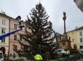 Šumperk hledá vánoční strom