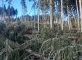 Silný vítr na Jesenicku lámal stromy