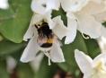Hejtmanství opět podpoří včelaře