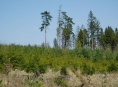 Obnova lesů zrychluje
