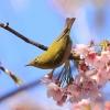 ilustrační snímek                              zdroj foto: Japonské centrum UP