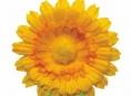 Květinový den mění termín