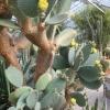 Sbírkové skleníky opět otevírají      zdroj foto: VFO