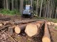 Také na Svitavsku se těží dřevo pro Moravu