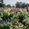 Letní Flora Olomouc – Souznění s přírodou