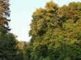 Den za obnovu lesa má termín 16. října