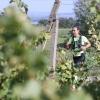 účastníci běželi kolem pálavských vinic     zdroj foto: P. Pátek - PatRess