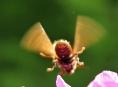 Výstava Svět hmyzu na zámku v Úsově