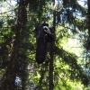 Paraglidistu sundávali hasiči ze stromu  zdroj foto:HZS Ok
