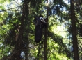 Paraglidistu sundávali hasiči ze stromu