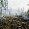 Požár lesa v Týnu nad Bečvou    zdroj foto:HZS Ok