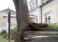 Spadlý strom při bouřce v Šumperku měl prohnilý kmen