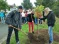 Šumperští studenti vysadili jeřáb ptačí
