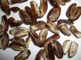Mrtvé larvy, brouky a plíseň našla inspekce v potravinách