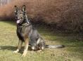 Policejní pes Xaver vystopoval zraněného sebevraha